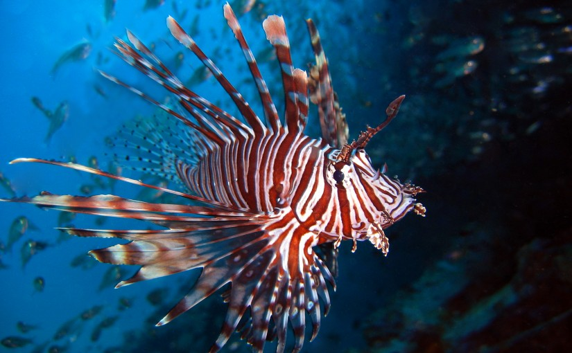Lionfish to be sold at Whole Foods