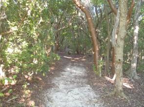 Lignumvitae Trails