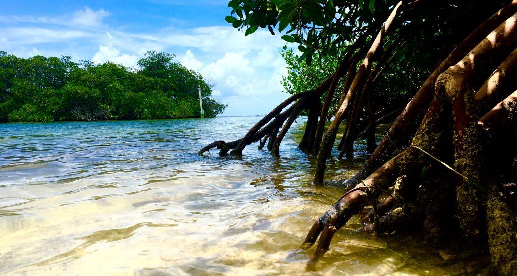 Beach Boys Key Largo