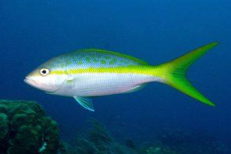 15 Best Tasting Fish in the Florida Keys - Islamorada
